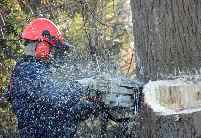 Arb & Forestry Co' + Freelance Operators